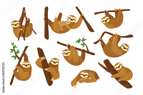 Naklejka premium Cute sloth on branch flat pictures collection. Cartoon funny sloth hanging on tree branch, sleeping, smiling isolated vector illustrations. Animals and wildlife concept