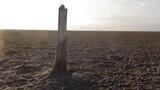 Fototapeta Fototapety z morzem do Twojej sypialni - Drewno pośród pustyni po wyschniętym morzu, morze Azowskie, Ukraina