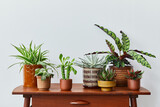 Fototapeta Kawa jest smaczna - Stylish composition of home garden interior filled a lot of beautiful plants, cacti, succulents, air plant in different design pots. Home gardening concept Home jungle. Copy spcae. Template