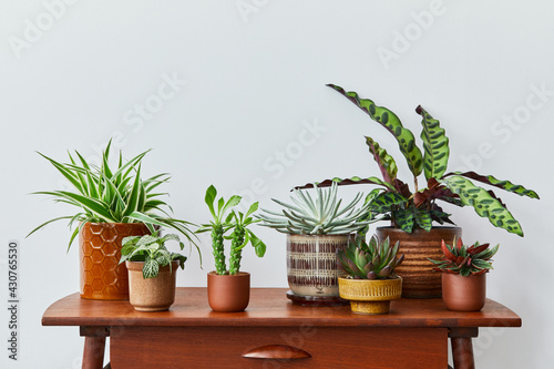Stylish composition of home garden interior filled a lot of beautiful plants, cacti, succulents, air plant in different design pots. Home gardening concept Home jungle. Copy spcae. Template - fototapety na wymiar