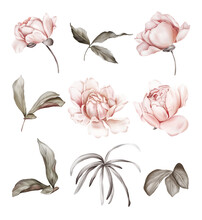 A Set Of Peony Buds And Leaves For Creating Flower Compositions