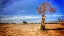 Drzewo W Jerozolimie Na Pustyni
