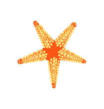 Fromia Monilis - Tiled Starfish - Dorsal View - Flat Vector