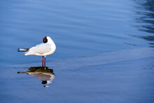 A Bird Standing Alone In A Pool Of Clear Blue Water