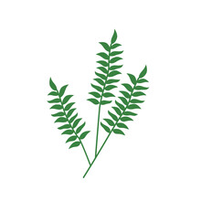 Twig Logo With Foliage. Beautiful Fern Illustration. Ornamental Plant On A White Background. Floral Print For Clothing, Design.