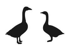 Silhouette Of Two Geese Meeting