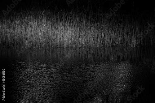 Fototapeta natural pond and in the foreground a detailed view at grass and reeds with refle