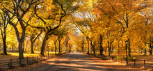 Autumn Foliage At The Mall In Central Park, New York City, USA