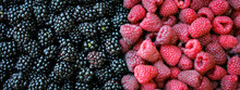 Banner. Fresh Blackberries And Raspberries Background With Ripe Berries. Blackberries Versus Raspberries. Berry Background. Blackberries, Raspberries Close Up, Macro. Food Background.
