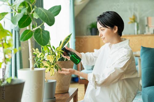 Obraz 出勤前に観葉植物に水をやる女性 - fototapety do salonu