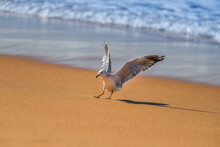 Portrait Of The White Seagull Bird On The Beach