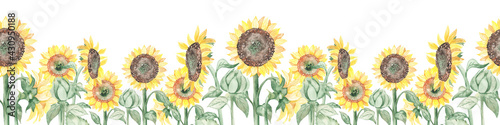 Fototapeta Watercolor seamless border with blooming flowers sunflowers on stems and buds obraz
