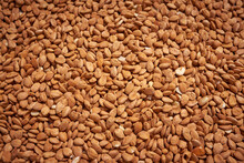 Dried Apricot Kernels Background Close Up