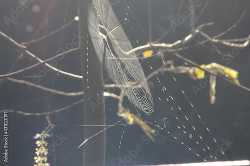 Fotomural Close up photo of spider web