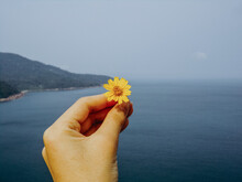 Hand Holding Small Yellow Flower Against Blue Ocean And Mountainside