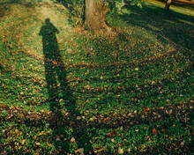 Person's Shadow Across Green Lawn With Tree Trunk