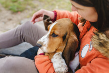 Basset Hound Dog In Hands Of Owner Sitting Outdoor In Day Top View Copy Space