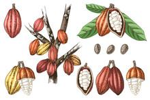 Hand Drawn Cocoa Beans Set