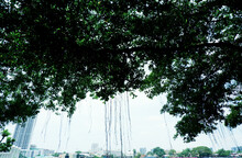 Power Of The Nature In Big City, Provide The Citizen Calmness