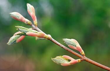 Kwiaty, drzewo, zielony, wiosna