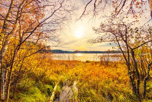 Obraz na plátně Sunset over the forest lake