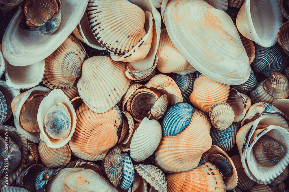 Fotografie, Obraz variety of sea shells from beach
