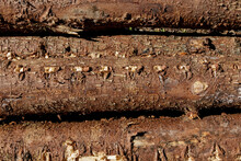 Pine Trunks Sawed Down, Without Twigs And Branches. Brown Chip.