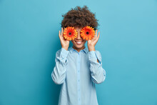 Pretty Cheerful Woman With Curly Hair Covers Eyes Holds Orange Gerberas Dressed In Stylish Shirt Isolated Over Blue Background. Positive Female Florist Going To Make Decor Or Bouquet For Special Event