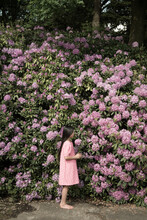 Girl In Pink Dress Standing In Front Of Large Purple Rhododendron Flower Bush