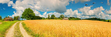 Panorama With Countryside Gravel Road Among Spring Fields And Old Oak Tree And Village On Horizon. Concept Of Ecological Tourism In Baltic Countries