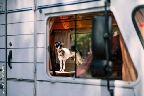 A white dog seen through a window in a motorhome - fototapety na wymiar