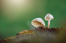 Beautiful Closeup Of Mushrooms Growing On The Trunk With Green Moss And Bokeh Forest Background. Mushroom Macro, Mushroom Photos, Forest Photos, Forest Backgrounds