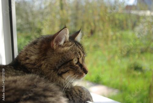 Obraz na płótnie A mongrel cat named Chewbacca