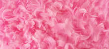 Beautiful Pink Feathers.