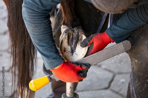 Werkowanie końskiego kopyta #431411188