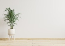 Empty Room White Walls With Beautiful Plants Sideways On The Floor.3d Rendering.