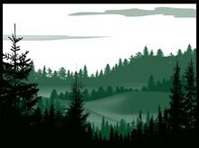 Evergreen Dark Forest In Hills