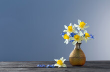 Yellow Narcissus  And Blue Snowdrops In Vase On Wooden Table On Dark Background