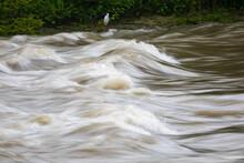 Garceta Común (egretta Garzetta) Delante De Un Río Con Fuerte Corriente Después De La Lluvia