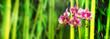 wilde orchidee im bambuswald