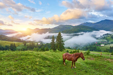 Horse Grazes In A Mountain Pasture Where, After Rain, Green Pastures In The Alpine Zone In The Carpathians Are Covered With A Sea Of Fog.