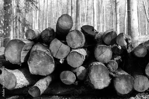 Obraz na plátně Schwarz-Weiss - Alte Baumstämme lagern im Wald
