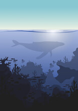 Underwater Seascape. Realistic Seascape With Sea Plants. Ocean Bottom Silhouette Marine, Underwater Vector With Whale Silhouette.