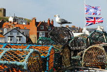 Seagull On Lobster Pots
