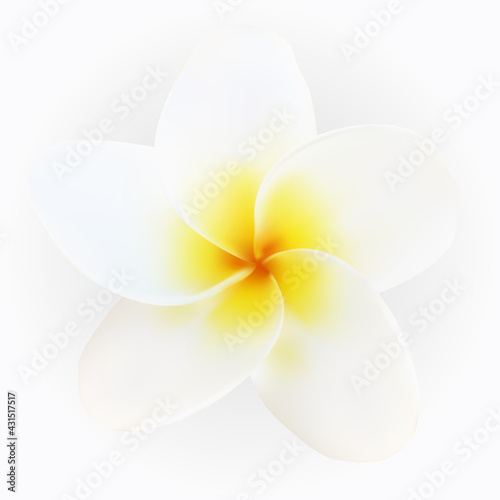 Photo Isolated colorful naturalistic white plumeria with shadow