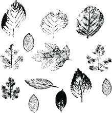 Leaves Skeleton Leaf Imprint Leaf Patern Abstraction Vector File Vector