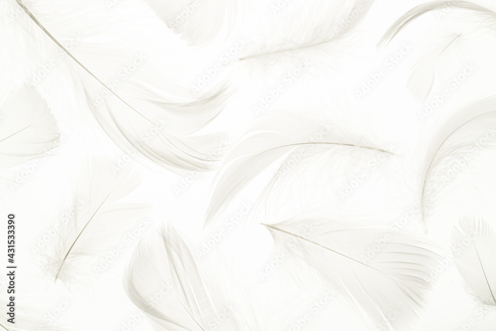 Feather pattern concept. Multicoloured pastel angel feather closeup texture on white background in macro photography, soft focus. Elegant expressive artistic image fragility of nature. Copy space.