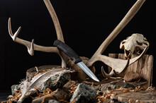 Hunting Knife And The Remains Of Various Animals. Knife On The Background Of The Horn And Skull Of An Animal.