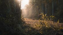 Trawa Przy Słupach Energetycznych Oświetlona Blaskiem Zachodzącego Słońca