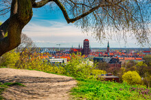 Spring Scenery Of The Old Town In Gdańsk Around Blooming Trees. Poland